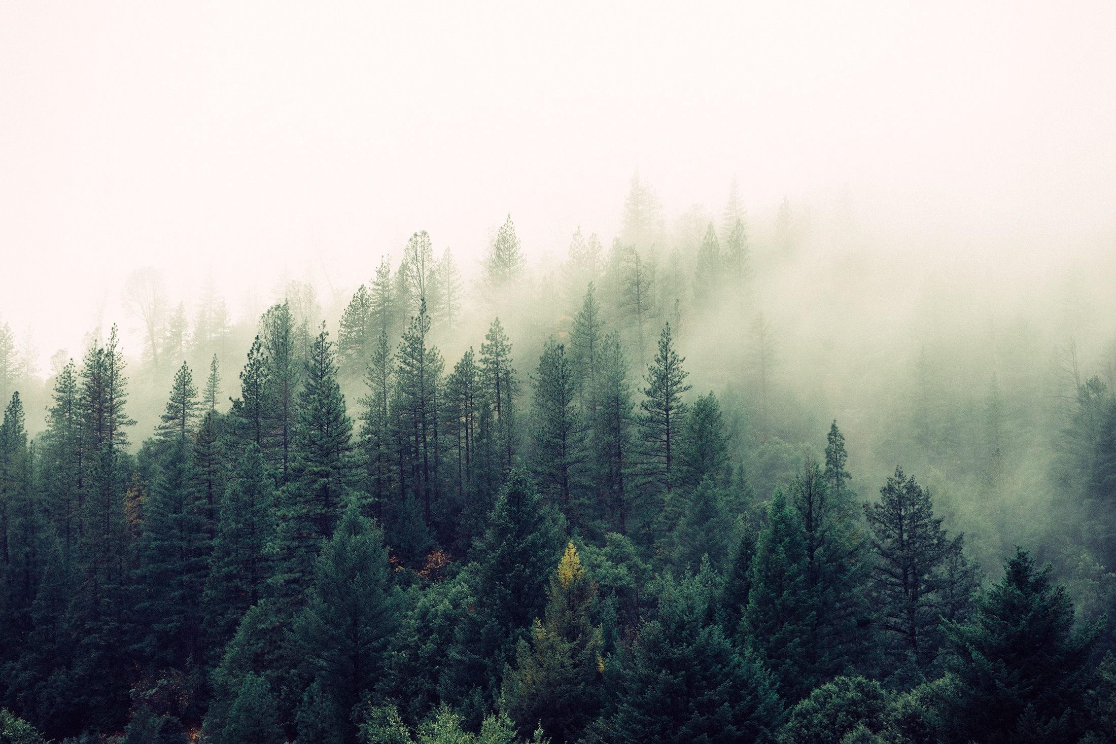 Forest Trust fails on AWS Directory Service
